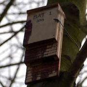 Bat Box