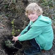 Woodland Trust saplings