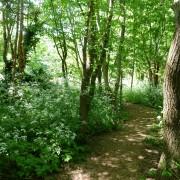 Springtime in woodland