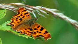 Friends of Montefiore Woodland Butterfly Surveys