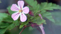 Friends of Montefiore Woodland Flora Survey
