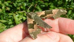 Montefiore Woodland Moth Survey