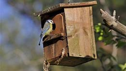 Friends of Montefiore Woodland Nestbox Survey