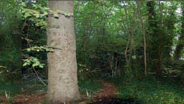 Friends of Montefiore Woodland Tree Survey